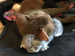 foxtrot-pillow
